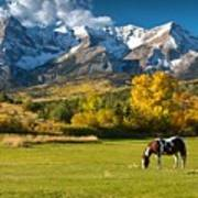Mountain Horse Poster