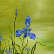 Mountain Iris Poster