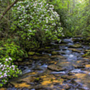 Mountain Laurels Light Up Panther Creek Poster