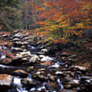 Mountain Leaves In Stream Poster