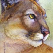 Mountain Lion Poster