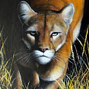 Mountain Lion In Tall Grass Poster