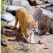 Mountain Lion In The Wild Poster by Lorraine Foster