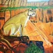 Mountain Lion In Thought Poster