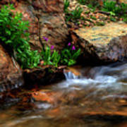 Mountain Stream Garden Poster