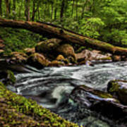 Mountain Stream Iv Poster