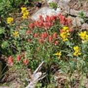 Mountain Wild Flowers Poster