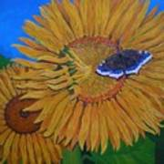 Mourning Cloak's Sunflowers Poster