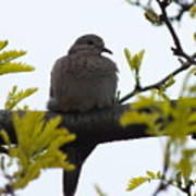 Mourning Dove 2 Poster