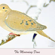 Mourning Dove In Snow Animal Portrait Poster