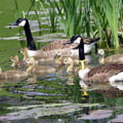 Mr And Mrs Goose And Family Poster