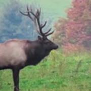 Mr Elk Enjoying The Autumn Poster