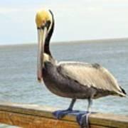 Mr. Pelican Poster