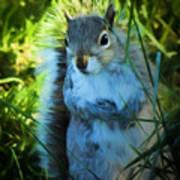Mr. Squirrel Poster