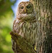Mrs. Owl Poster