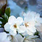 Mt. Fuji Cherry Blossoms Poster