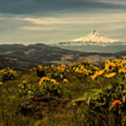 Mt. Hood And Wildflowers Poster