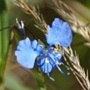 Mt. Lemmon Flower Poster