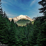Mt Rainier Through The Trees Poster