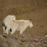 Mtn.goats Poster