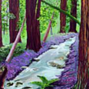 Muir Woods - Psalm 1 Verse 3 Poster