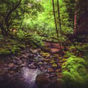 Muir Woods No. 3 Poster
