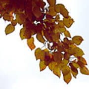 Mulberry Autumn Poster
