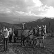 Mule Drawn Wagon Poster