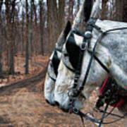 Mules At Sugar Camp Poster