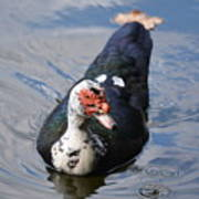 Muscovy 16-07 Poster