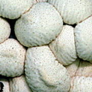 Mushroom Cluster Poster