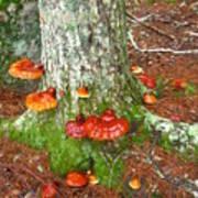 Mushroom Family Poster