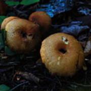 Mushroom Menagerie Poster