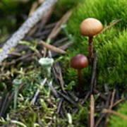 Mushroom Tundra Poster