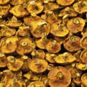 Mushrooms In Spain Poster