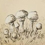 Mushrooms On Toned Paper With Charcoal Poster