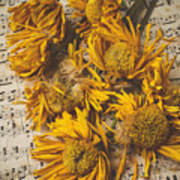Musical Sunflowers Poster