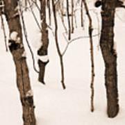 Muskoka Winter 3 Poster