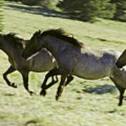 Mustang Mares Poster