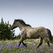 Mustang Running 2 Poster