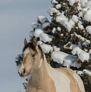 Mustang Winter Poster