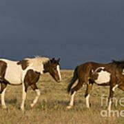 Mustangs In Nevada Poster
