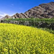 Mustard Field, Hemis, 2007 Poster