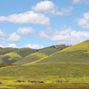 Mustard On Nipomo Hills Poster