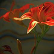 My Daylilies 2 Poster