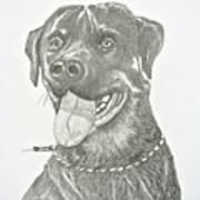 My Dog Kito Poster
