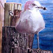 My Gull Poster
