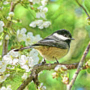 My Little Chickadee In The Cherry Tree Poster