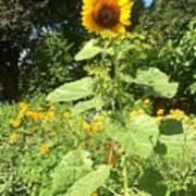 My Own Sun In My Backyard  Poster