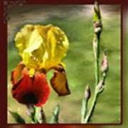 My Painted Iris Poster